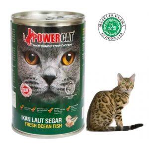 foto-rekomedasi-makanan-kucing-yang-bagus-dan-murah-2